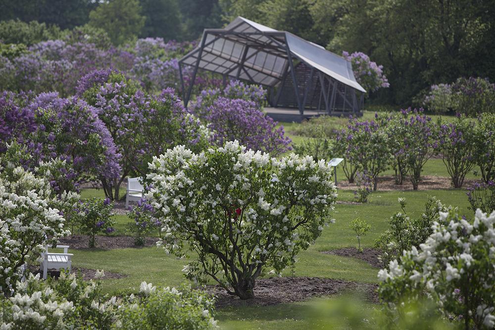 afc2a5edec5d Lilac Garden